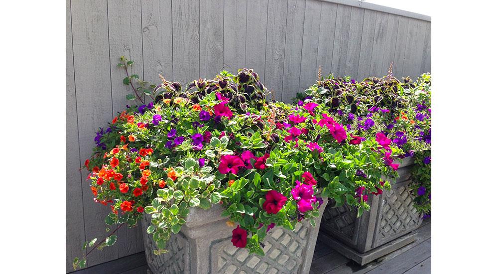 flower-pots-slider-006