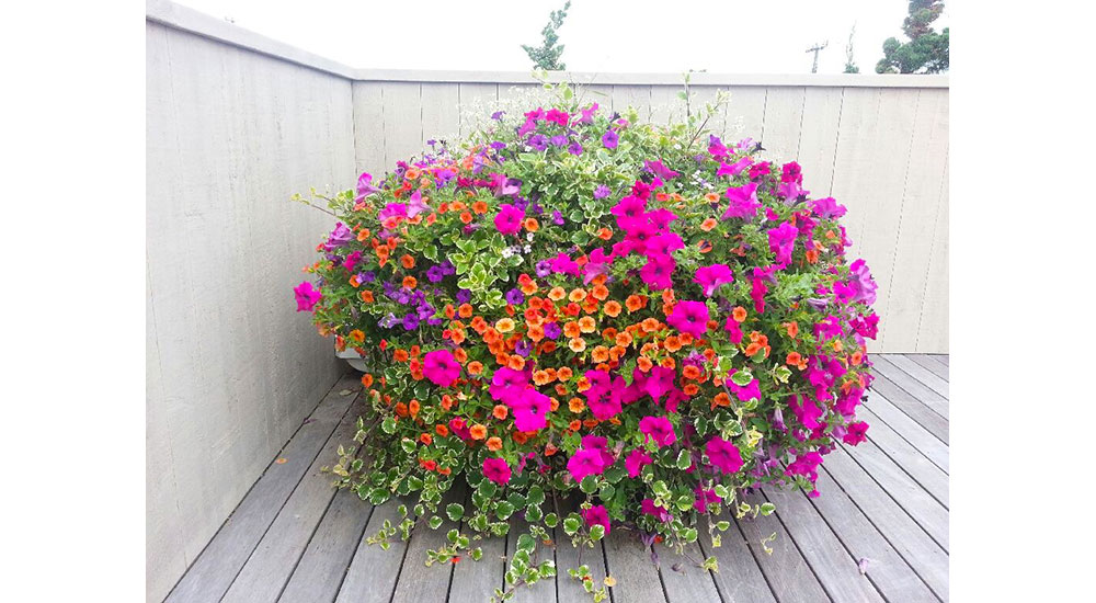 flower-pots-slider-015