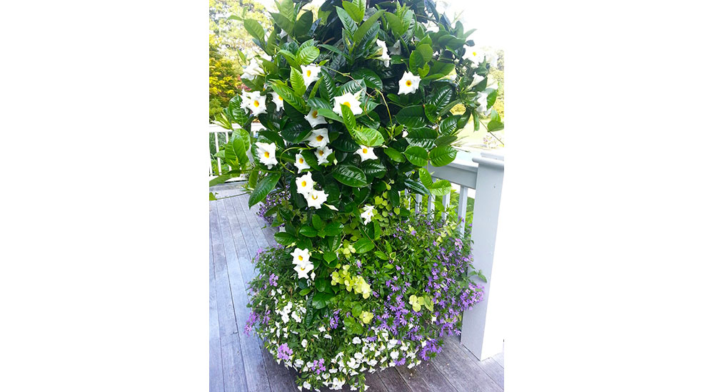 flower-pots-slider-019