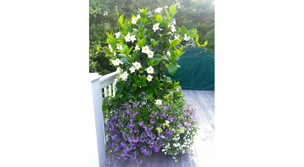 flower-pots-slider-020