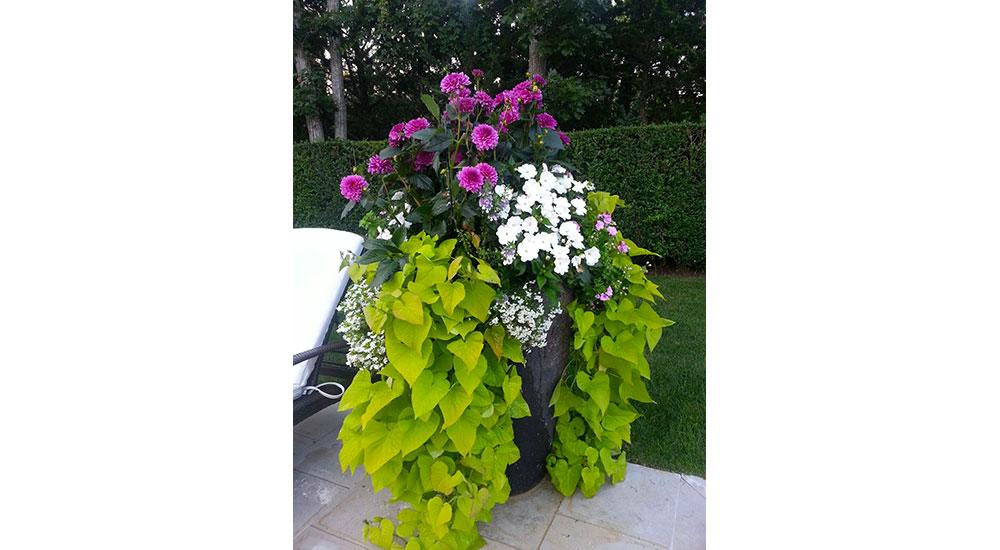 flower-pots-slider-021