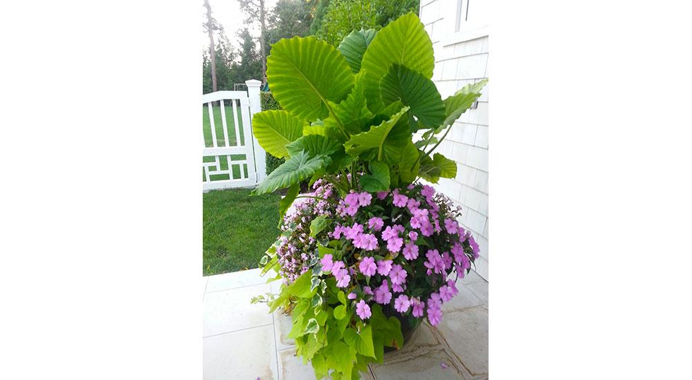 flower-pots-slider-022