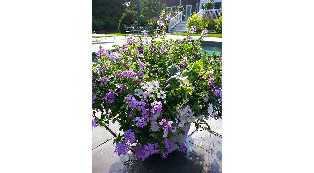 flower-pots-slider-027