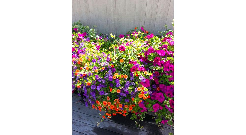 flower-pots-slider-033