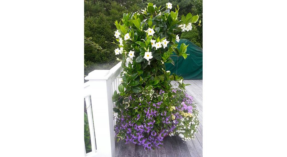 flower-pots-slider-037