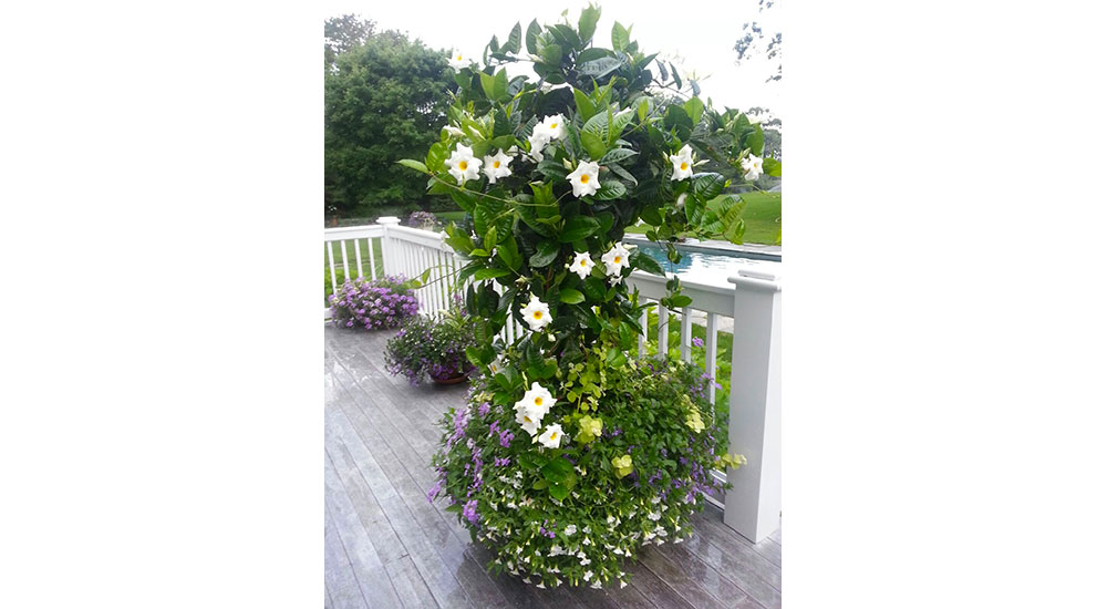 flower-pots-slider-039