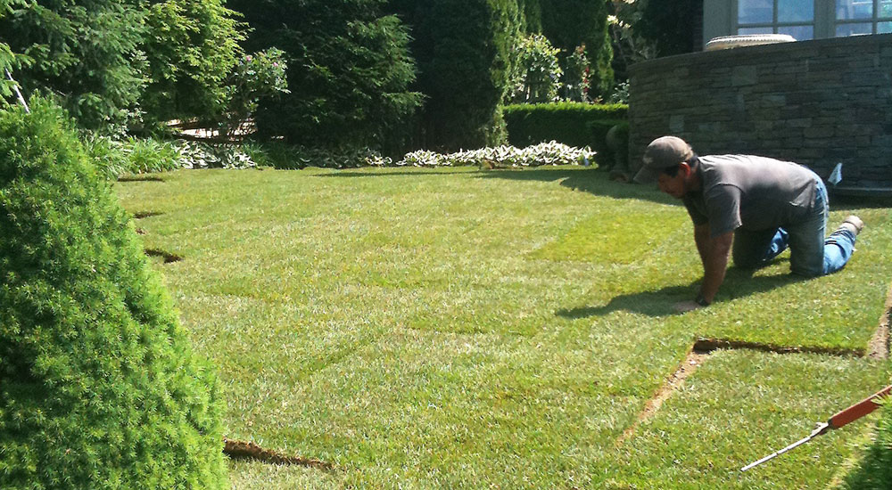 new-sod-lawns-slider-005